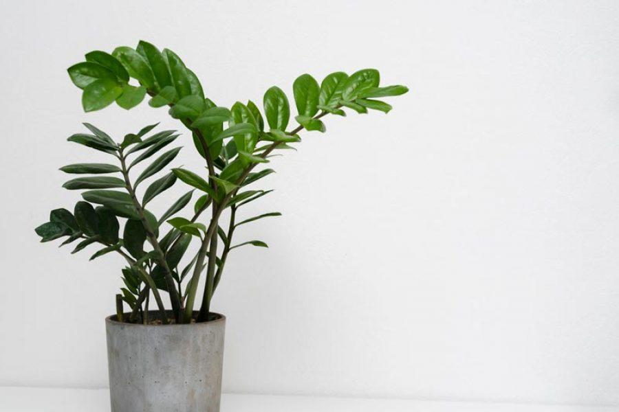 Ինչպե՞ս ճիշտ խնամել սենյակային բույսերին